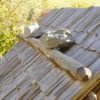 Detail des Schindeldaches mit HolznägelnDettaglio del tetto in scandole con chiodi di legnoDetail of the shingle roof with wooden pegs3350-2890 BCVillanuova sul Clisi-Monte Covolo, I